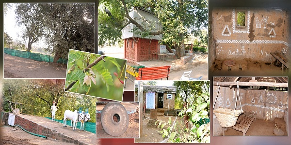 Enjoy Bird watching, Hurda Parties, Bullock-cart rides, Bird watching, Rural games at Morachi Chincholi
