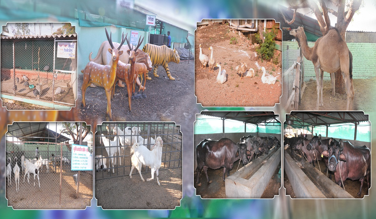 watch the animals in morachi chincholi